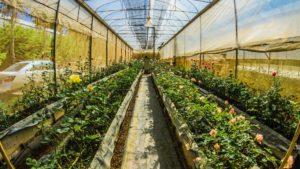 Växthus för odling