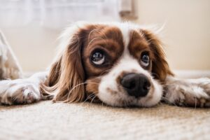 Bra att tänka på innan man skaffar hund