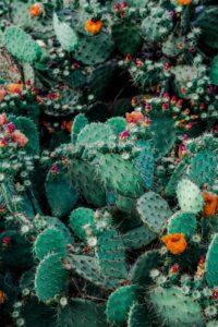Lättskötta växter – Kaktus är favoriten